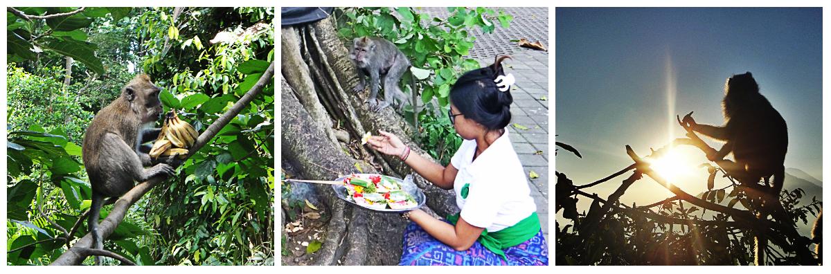 Affen-Bali